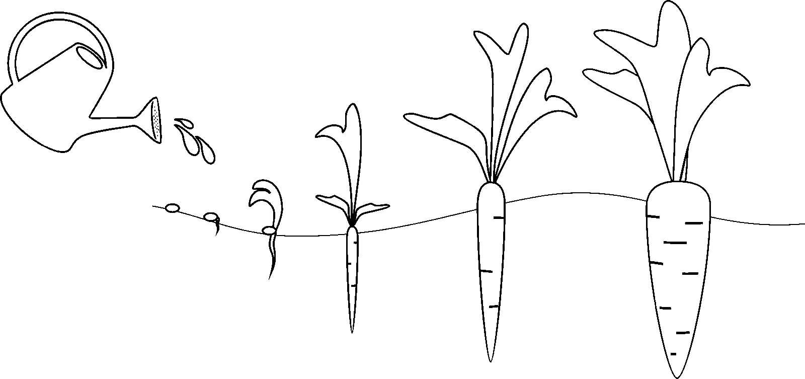 картинки семя росток цветок с бутоном цветок раскрылся настолько креативный что