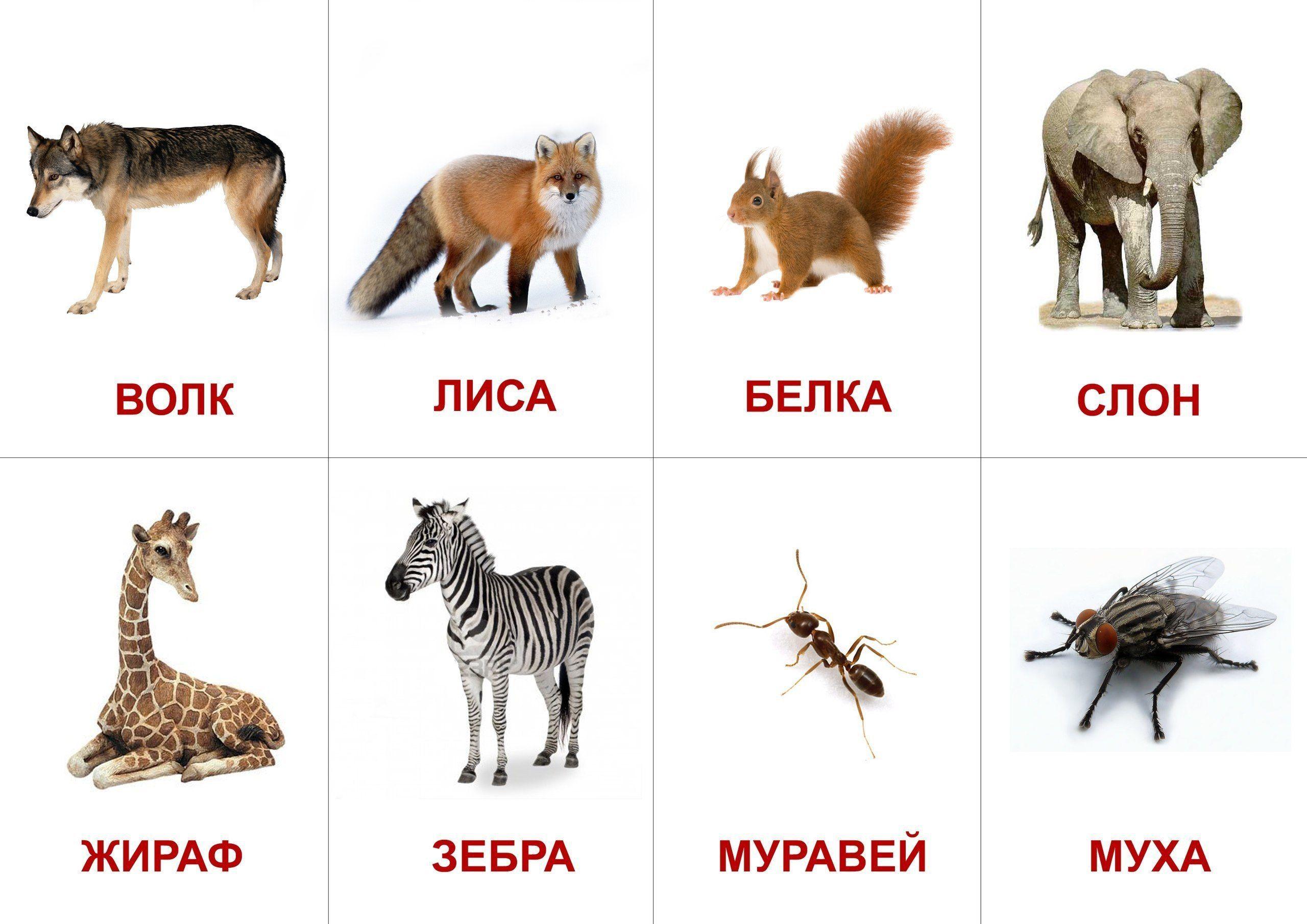 что это картинки животные для карточек компания