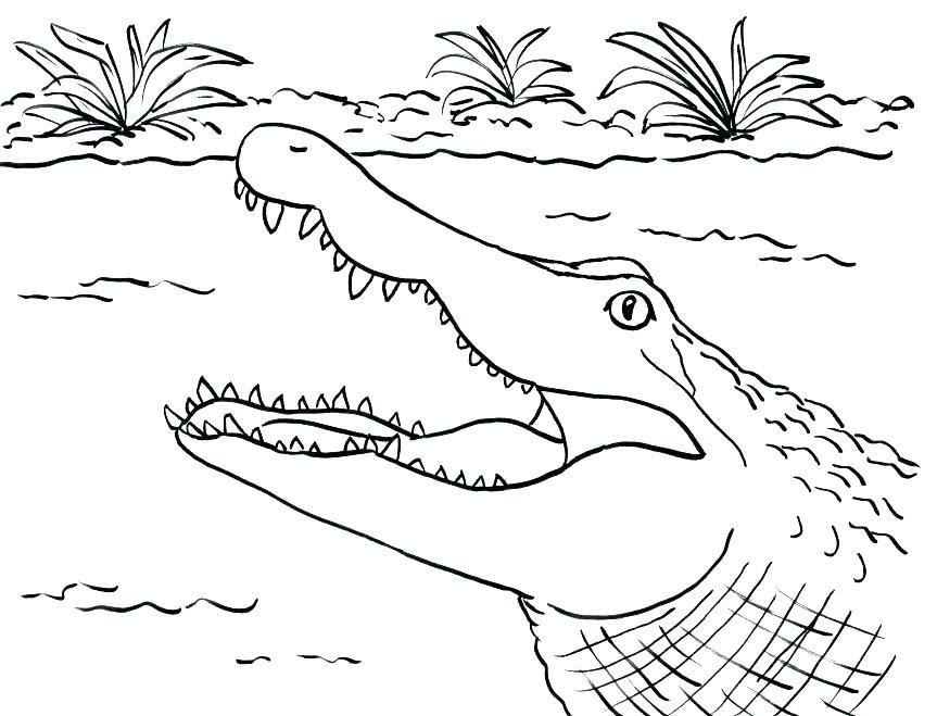 Картинки крокодила раскраска