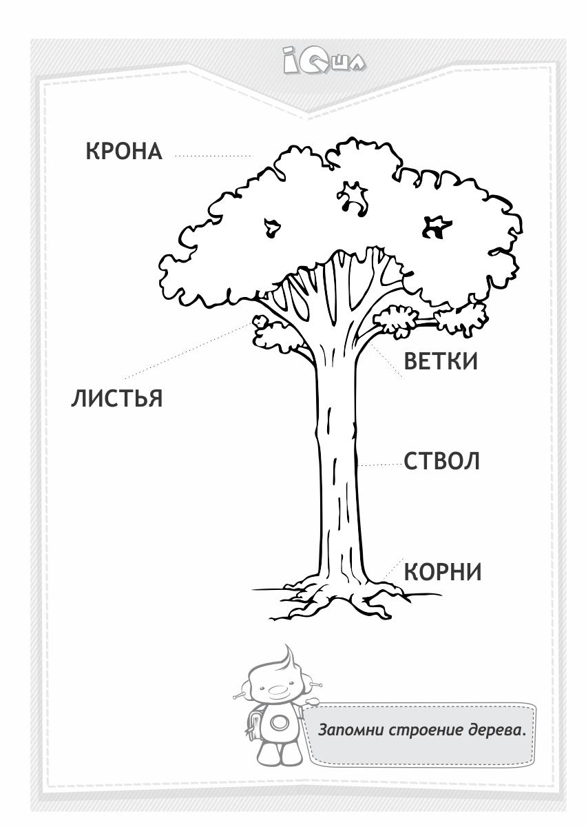 Раскраска Строение дерева пособия для изучения строения деревьев