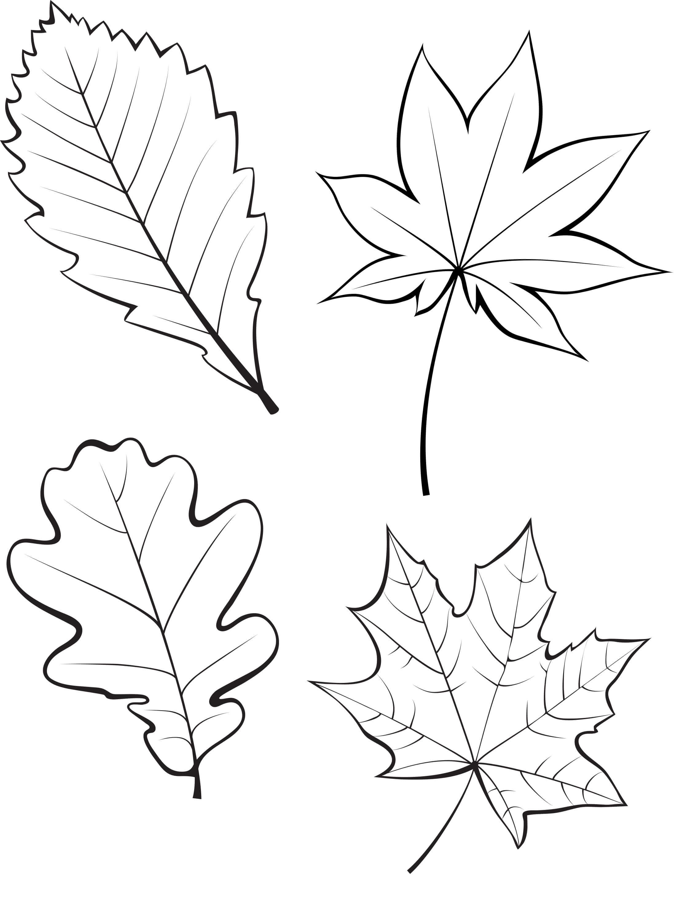 только чечены листья картинки шаблоны для вырезания вырастет