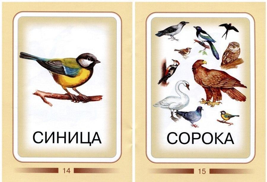 Все Карточки для изучения птиц с детьми карточки из категории природа. Пернатые птицы