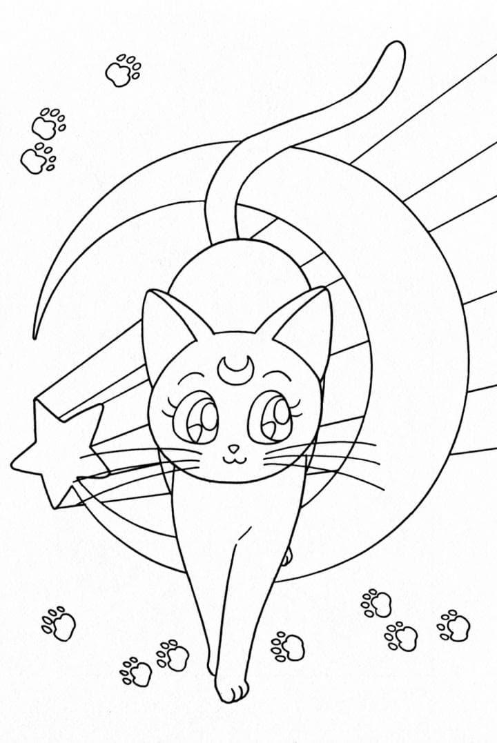 Все Следи кошки ,кошка с месяцем аниме и следы кошки,