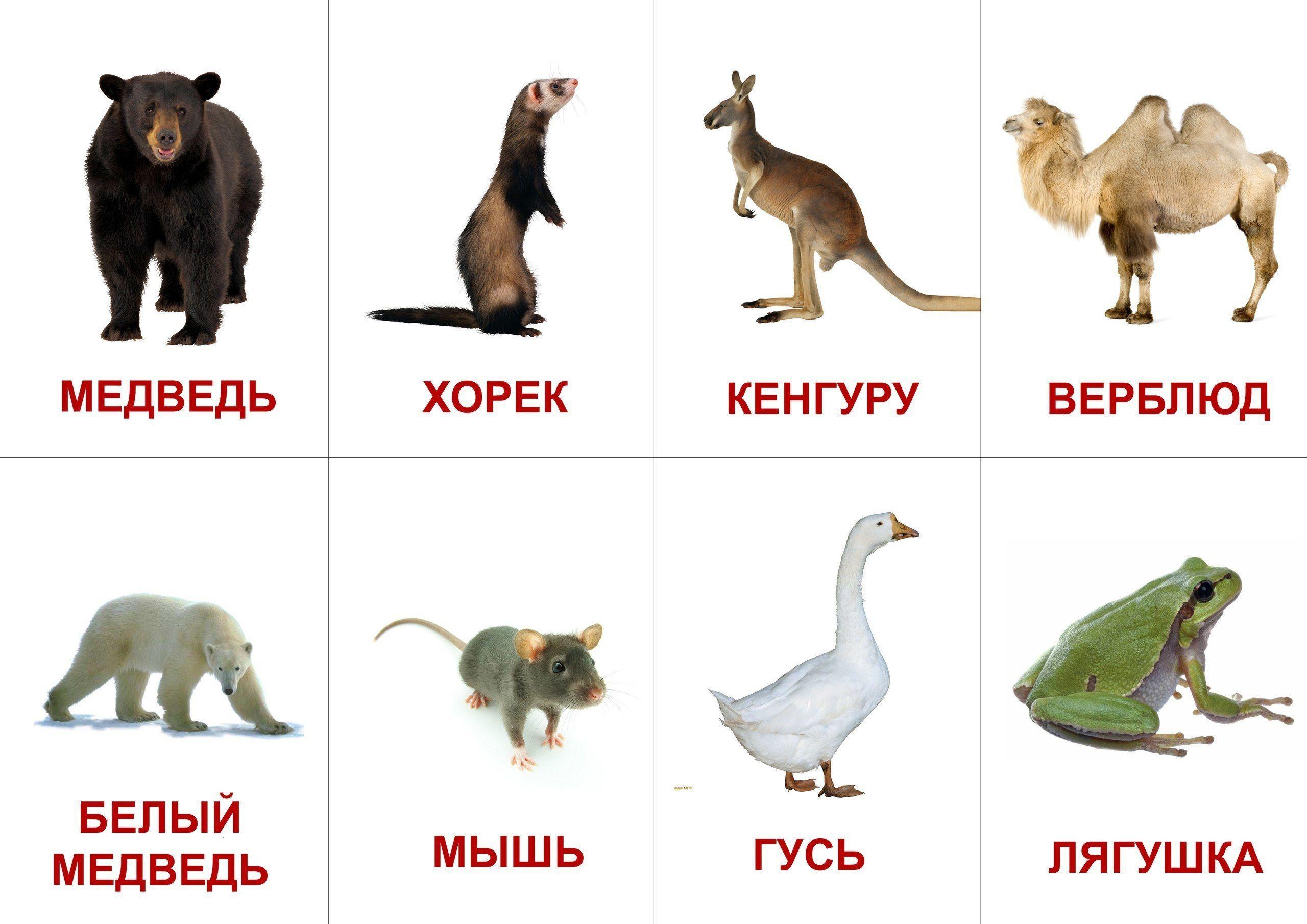 Детские карточки с картинками животных