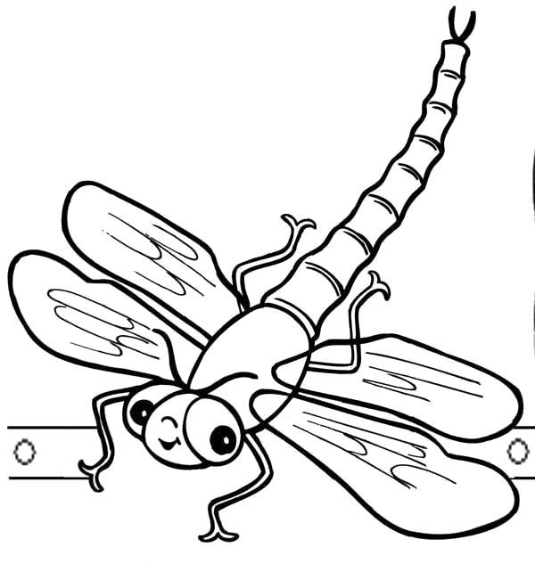 Распечатать раскраски насекомые