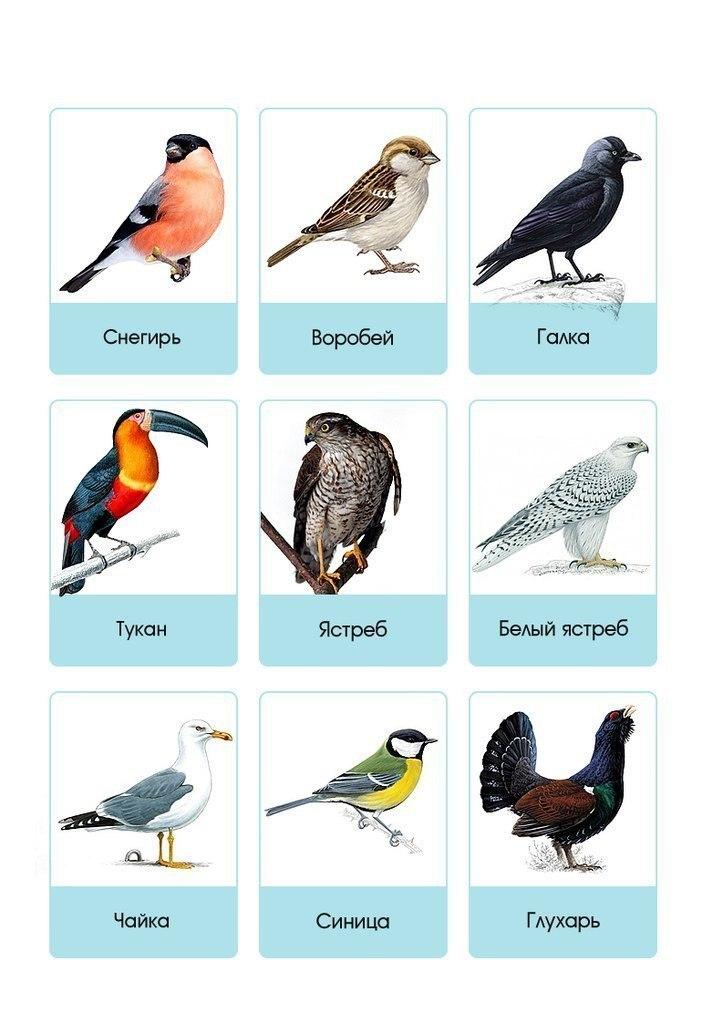 Как найти название птицы по картинке