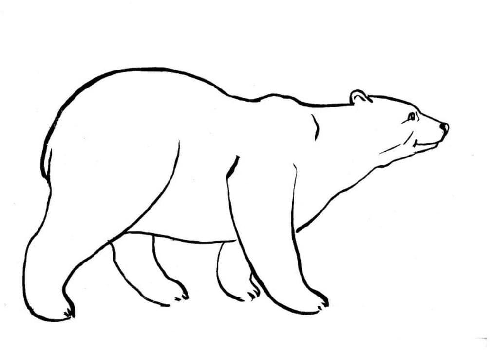 Белый медведь раскраска распечатать